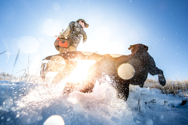 Bird hunter and bird dog making a move in Montana in search of upland birds pheasants grouse and partridge