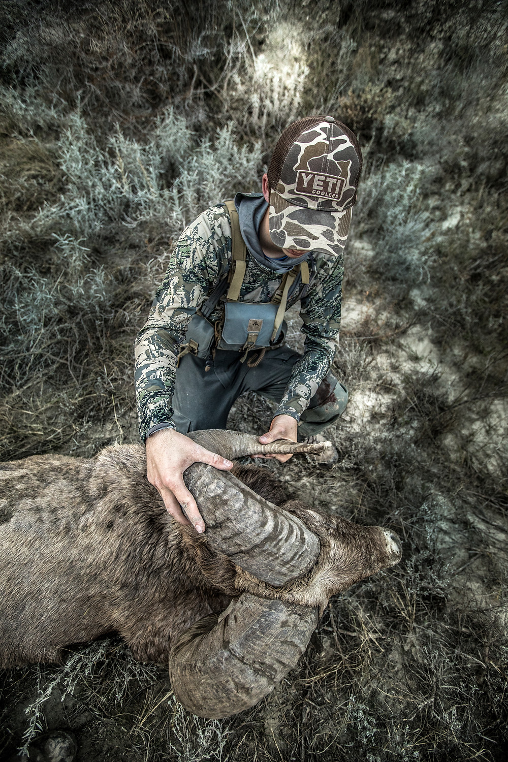 Sheep hunter looking over his once in a lifetime harvest of a bighorn sheep ram wearing Sitka gear camo and a Yeti coolers hat
