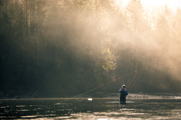Fly fisherman hooked up on Bull trout on remote river of British Columbia Canada near Vancouver islands