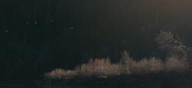 RED Raven 4.5k frame grab of ducks flying around river corner lit up by sun with dark background