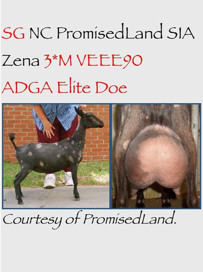 """""""SG NC Promisedland SIA Zena 3*M"""" VEEE90"""