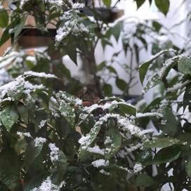 Snow / 雪