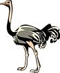 ostrich_PNG76976.png