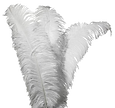 plumes-300x282_edited.png
