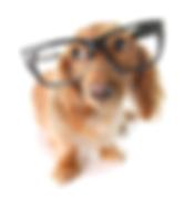 Arrowhead Lakes Pet Sitters