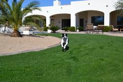 Pet Sitting Scottsdale