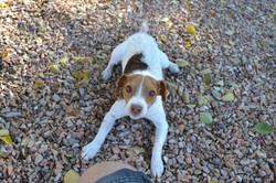 Athena Pet Sitting 85308