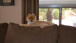 Pet Sitting Peoria AZ