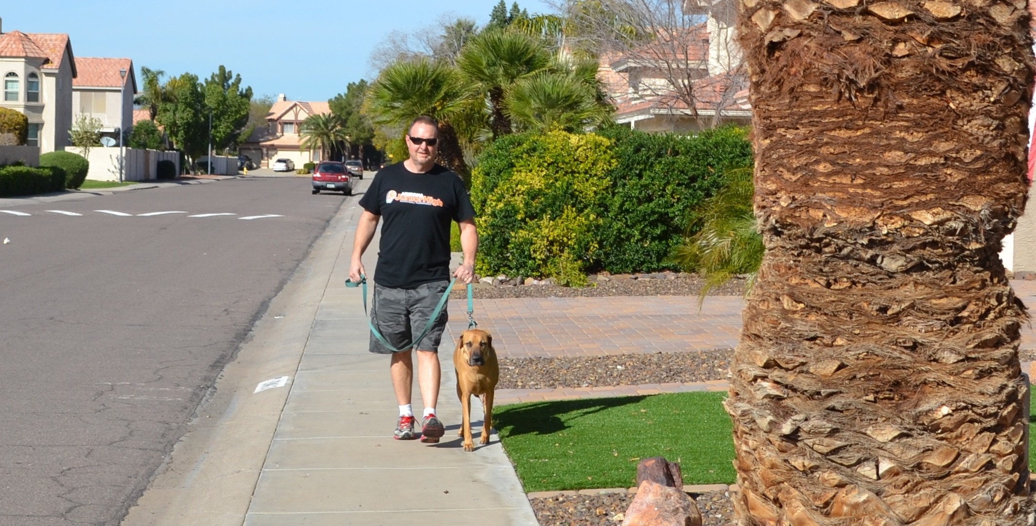 Pet Sitting in North Phoenix