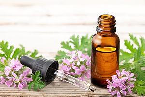 Geranium essential oil with fresh gerani