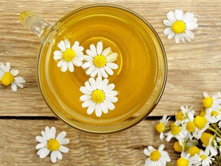 【旅行的香氣】有一種熟悉的味道 像母親溫暖香甜的氣息 安心守護精油-羅馬洋甘菊Roman Chamomile