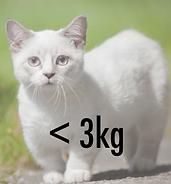 cat collar light weight