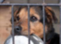 shelter dog waiting for food