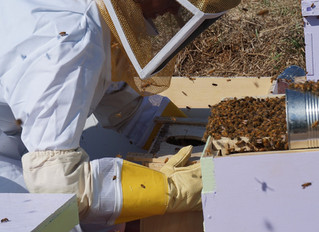 Ann Arbor and SE Michigan Beekeeping Resources