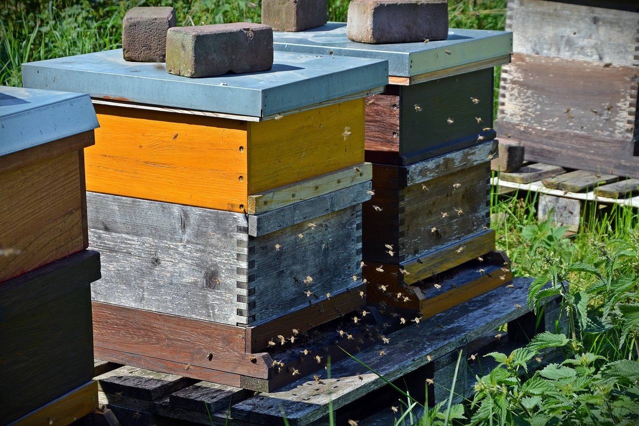 Ann Arbor Bee Vet | A2BeeVet