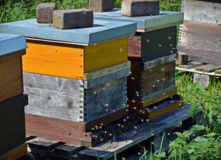 VFDS FOR HONEYBEES — WHAT AND WHY?