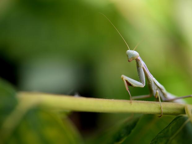 Peaceful Grasshopper