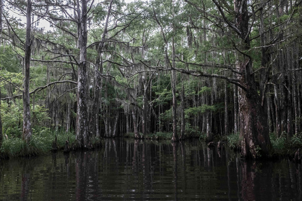 Swamps - Slidell, LA