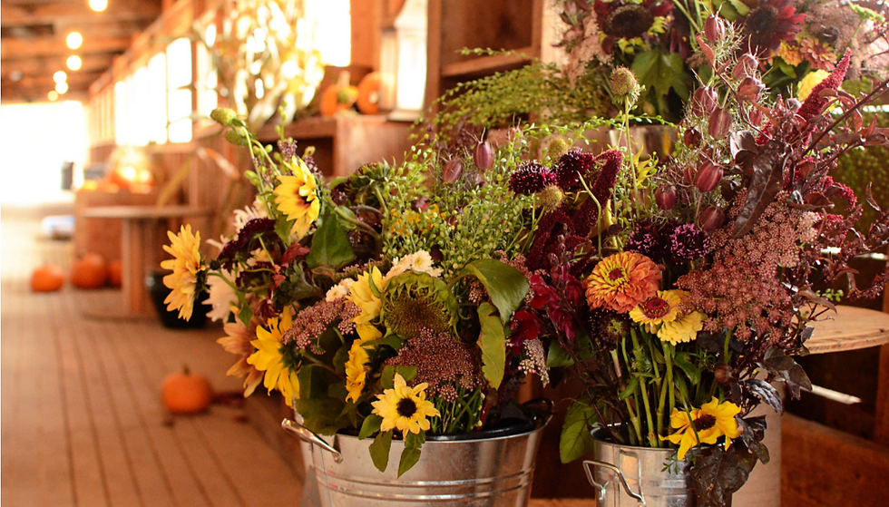Whidbey Farm and Market