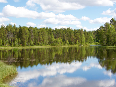 Sustainable Forestry in Sweden