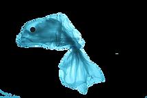 01-fish-2.png