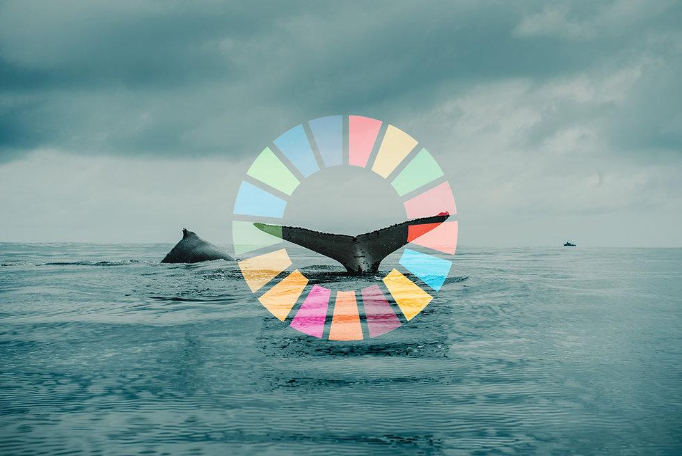 UN-teaser.jpg