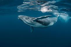 whale-01-owp.jpg