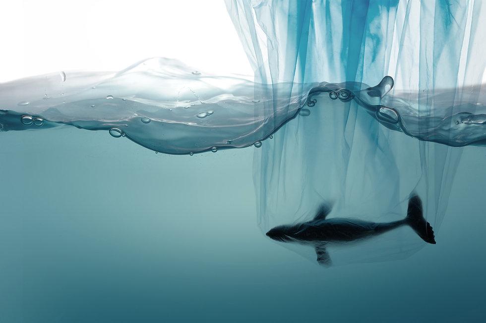 bag-water-whale.jpg