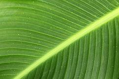 green-leaf_zyB0xHiu.jpg