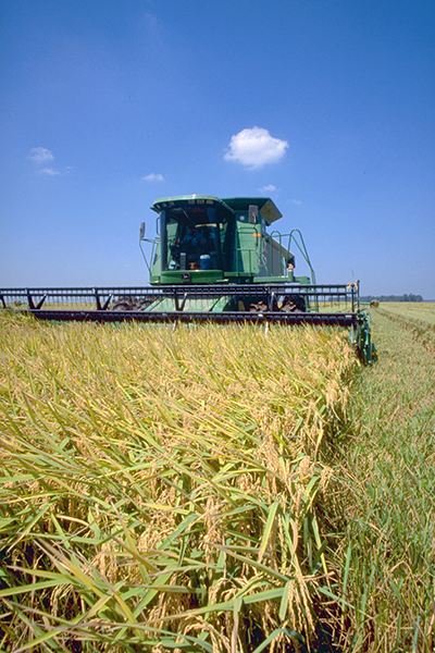 combine-harvesting-rice2.png
