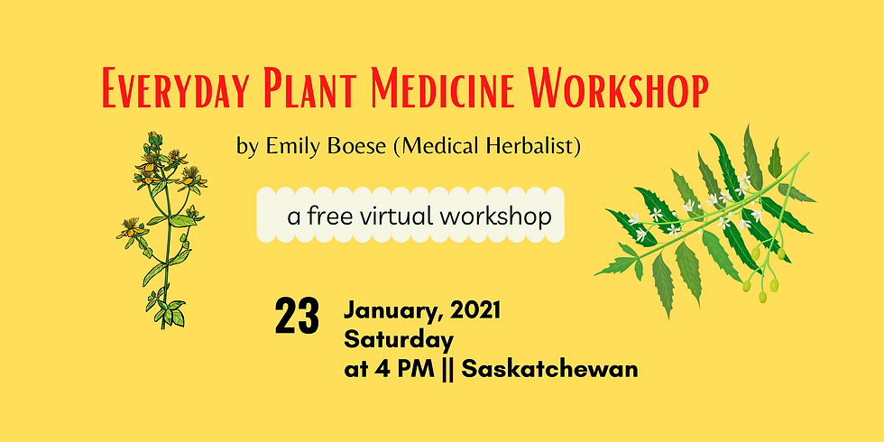 Everyday Plant Medicine Workshop