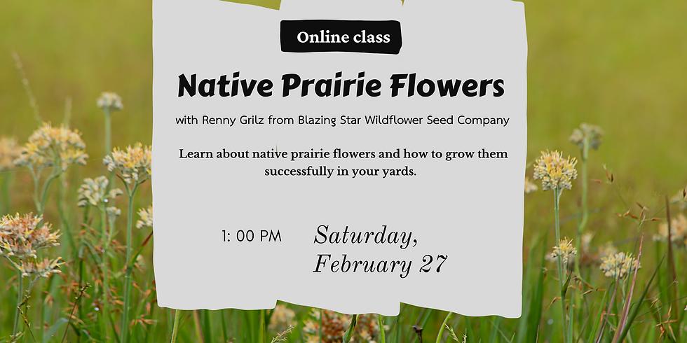 Native Prairie Flowers Workshop