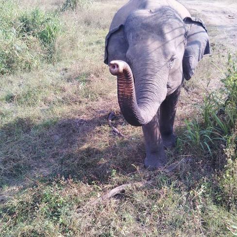 Elephant greeting. I'll come again