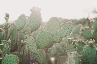 Cactus3_16x24_RGB.jpg