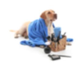 dog grooing, full groom , leamington spa
