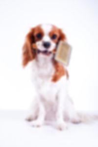 Dog brush, dog grooming, leamington spa.