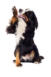 Dog paw, dog grooming, leaminton spa.jpg
