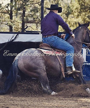 Bribbaree Cowhorse photos are up on my F