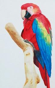 Taller de técnicaas de pintura Alumno  Acuarela sobre papel