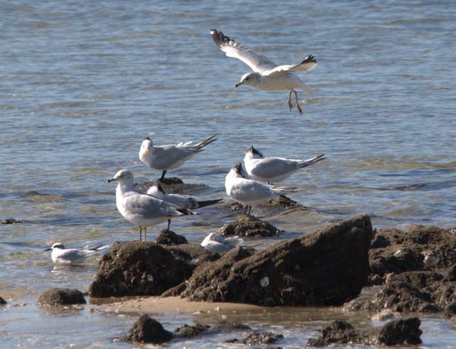 gulls1.jpg