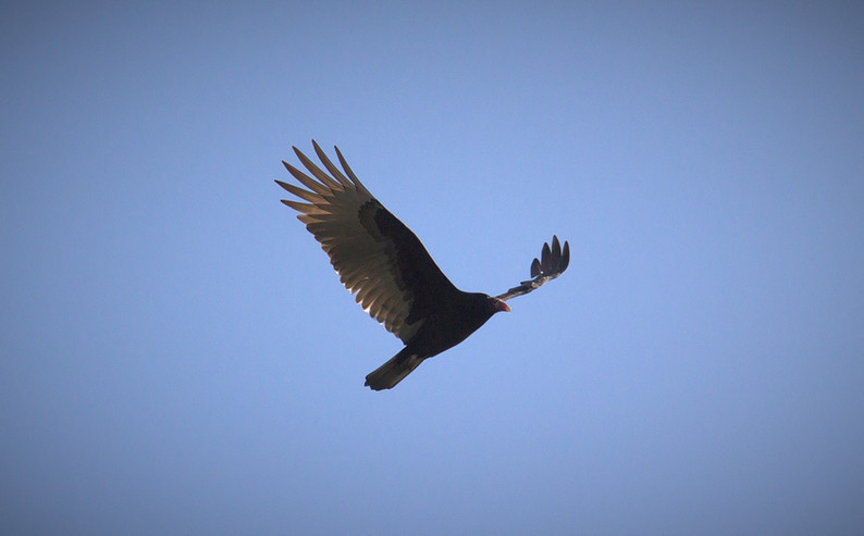 vulture-studio (3).jpg