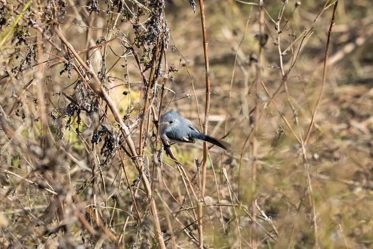 small bird.jpg
