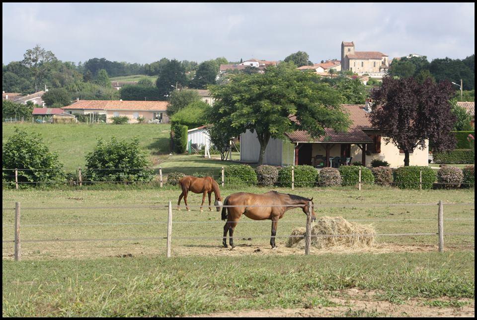 chevaux_prés_st_etienne