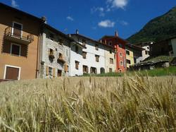 Bild7Gerstenfeld am Dorfplatz von Dordolla