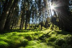 F004352-tnp_014_forests_on_pokljuka_plat