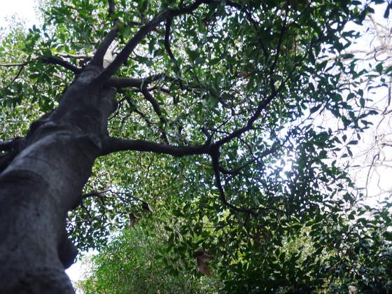 民有地の緑を表彰する杉並区の活動