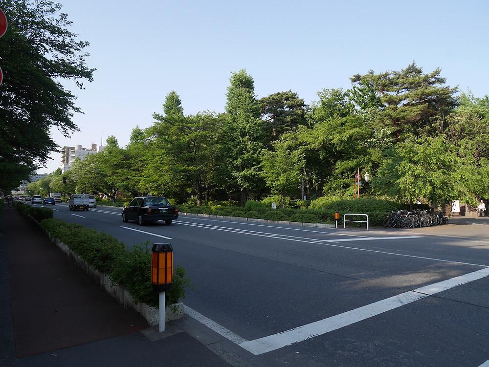 国立駅南口から一橋大学に至る大学通り。校内の樹林がまちの風景となっている
