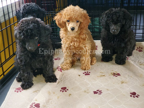 Watermarked Puppy Pic.jpg