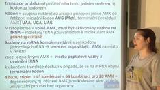 Metabolismus AMK, bílkoviny, proteosyntéza