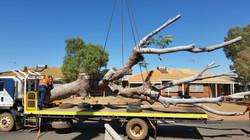 African Mahogany trunk